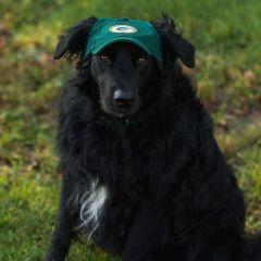 Green Bay Packers Pet Baseball Hat