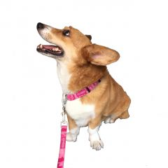 Packers Pink Camo Dog Leash